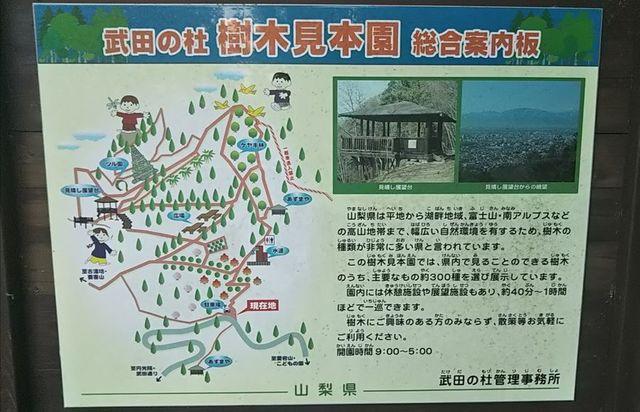 2日目_樹木見本園.jpg
